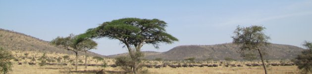 Longhaul holidays from Escape Worldwide - the Wildebeest migration, Tanzania