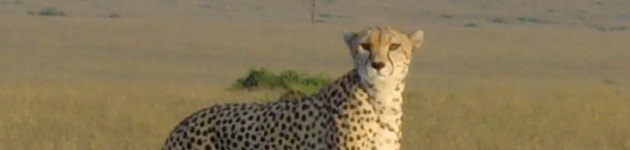 Special offers on safari to Kenya