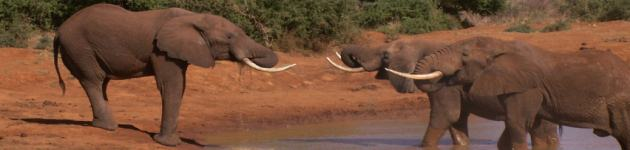 Longhaul holidays from Escape Worldwide - Elephants at Tsavo East National Park