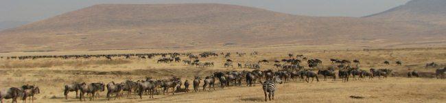 On Safari in East Africa