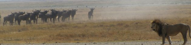 Longhaul holidays from Escape Worldwide - on Safari in Tanzania