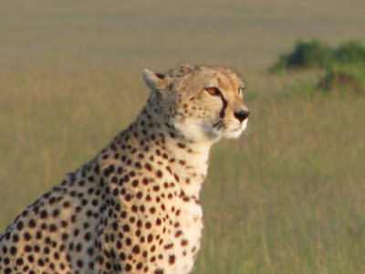 Driving safaris in Kenya