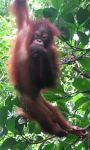 Touring holidays to Malaysia, tours of Borneo