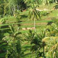Multi centre holidays to Thailand and beyond - Bali - rice fields