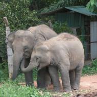 Escorted touring holidays to Sri Lanka