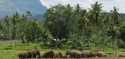 Ceylon Tour - Spectacular scenery and wildlife in Sri Lanka