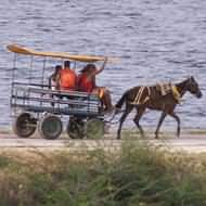 Local transport on the Ancon Peninsula, Trinidad