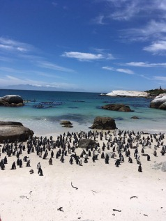 Cape Town, Garden Route & Eastern Cape Safari Fly-Drive Holidays