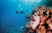 Holidays to Australia with Escape Worldwide - Great Barrier Reef (copyright Tourism and Events Queensland)