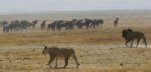 See the wildlife of the Serengeti in March