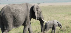 Safari Holidays to East Africa