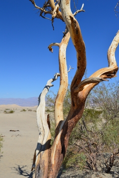 Holidays to Death Valley and Mammoth Lakes with Escape Worldwide