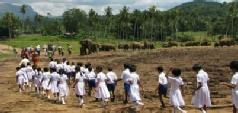 Multi Centre Holidays to Sri Lanka