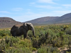 Eastern Cape Safari & the Garden Route Fly-Drive Holidays