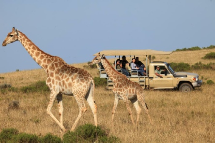 Holiday to the Botlierskop Game Reserve, Mossel Bay, South Africa