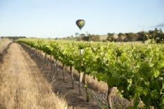 Holidays to Australia with Escape Worldwide - Barossa Valley SA (copyright South Australian Tourism Commission)